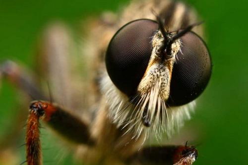 Böceklerdeki muhteşem sanat 43