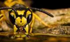 Böceklerdeki muhteşem sanat