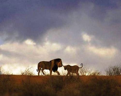 Güney Afrika'nın renkleri 10