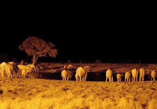 Güney Afrika'nın renkleri 6