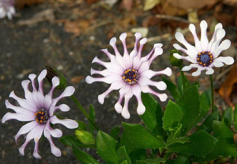 Tefekkürlük, özel çiçekler 1