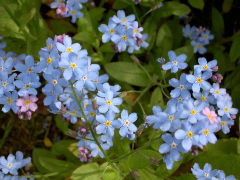Tefekkürlük, özel çiçekler 10