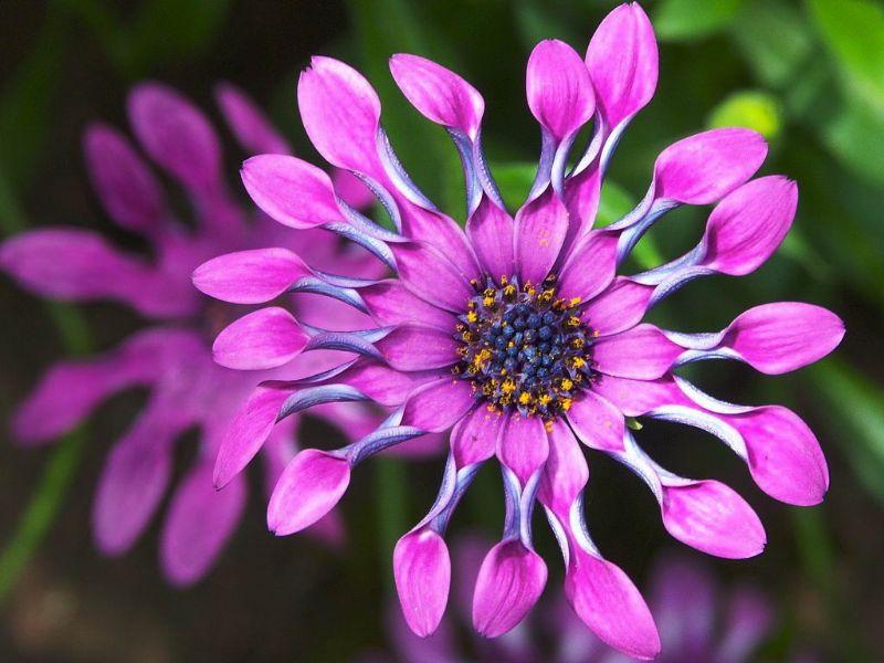 Tefekkürlük, özel çiçekler 11