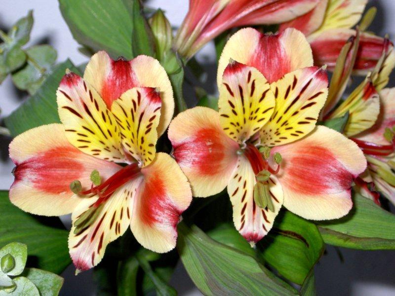 Tefekkürlük, özel çiçekler 12