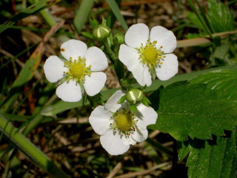 Tefekkürlük, özel çiçekler 13