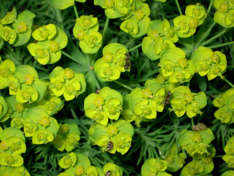 Tefekkürlük, özel çiçekler 14