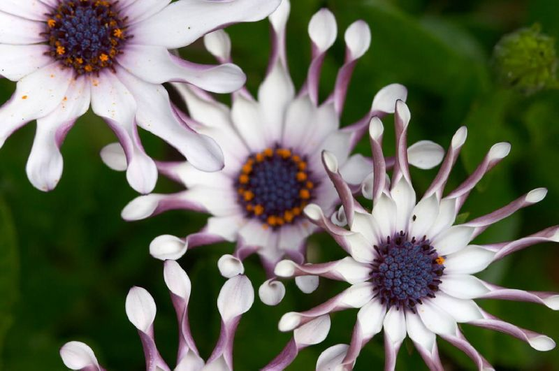 Tefekkürlük, özel çiçekler 15