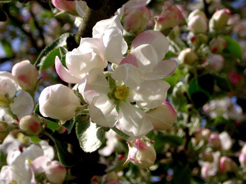 Tefekkürlük, özel çiçekler 2