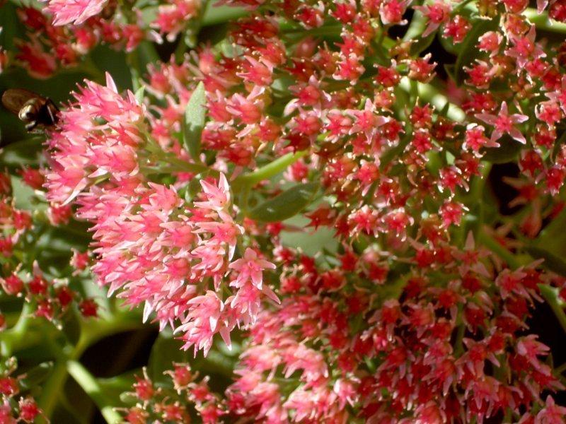 Tefekkürlük, özel çiçekler 3