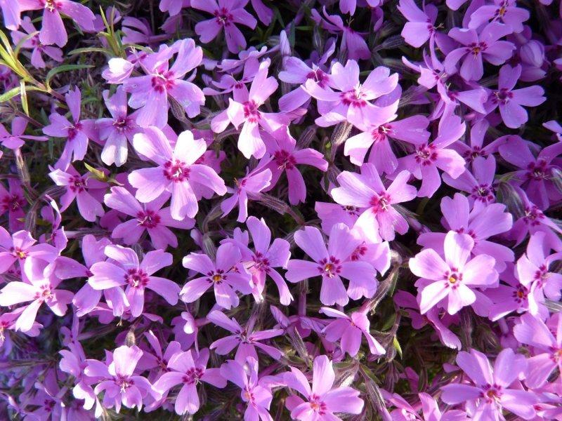 Tefekkürlük, özel çiçekler 4