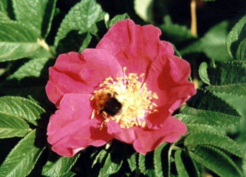 Tefekkürlük, özel çiçekler 6