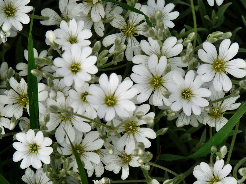 Tefekkürlük, özel çiçekler 7