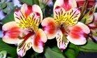 Tefekkürlük, özel çiçekler