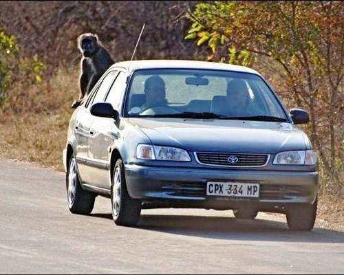 Afrika'nın yolları 10