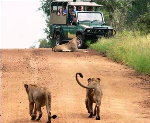 Afrika'nın yolları 11