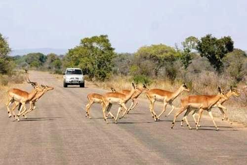 Afrika'nın yolları 13