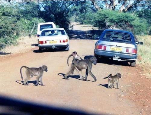 Afrika'nın yolları 16