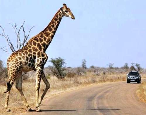 Afrika'nın yolları 18