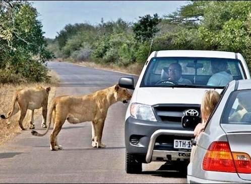Afrika'nın yolları 2