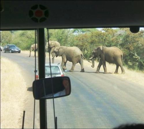 Afrika'nın yolları 4
