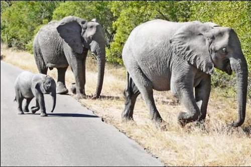 Afrika'nın yolları 5