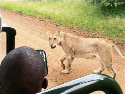Afrika'nın yolları 9