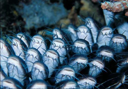 Denizler altından kareler 10