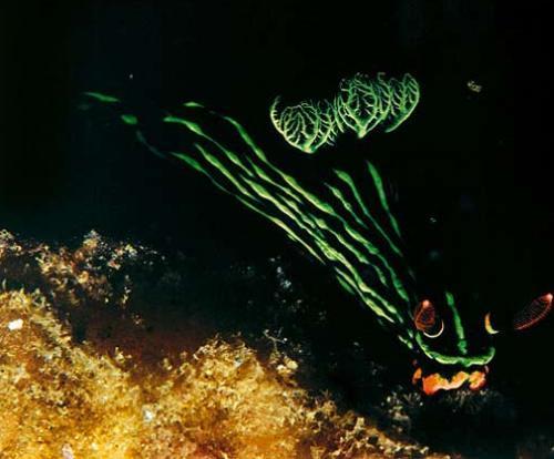 Denizler altından kareler 14