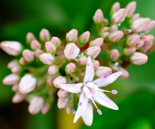 Baharı müjdeleyen çiçekler 1