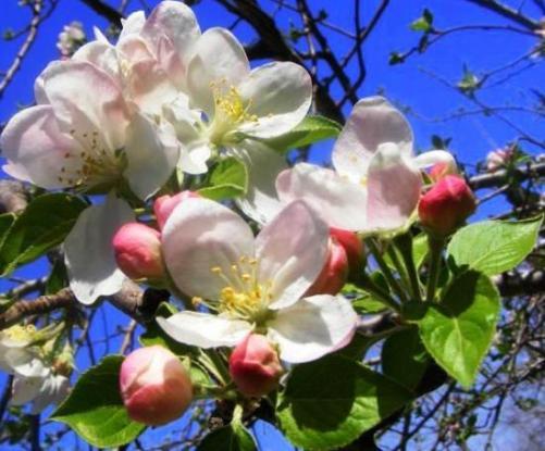 Baharı müjdeleyen çiçekler 10