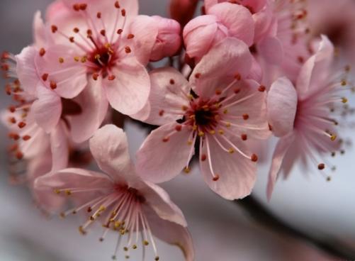 Baharı müjdeleyen çiçekler 11
