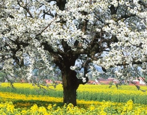 Baharı müjdeleyen çiçekler 12