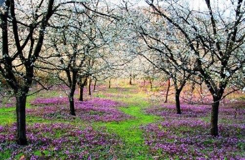 Baharı müjdeleyen çiçekler 13