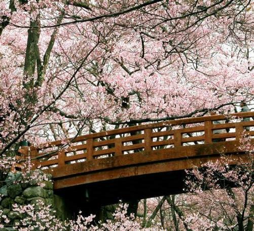 Baharı müjdeleyen çiçekler 14