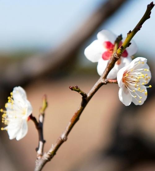 Baharı müjdeleyen çiçekler 3