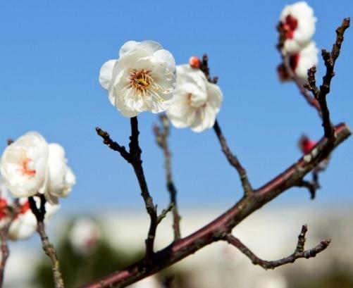 Baharı müjdeleyen çiçekler 4