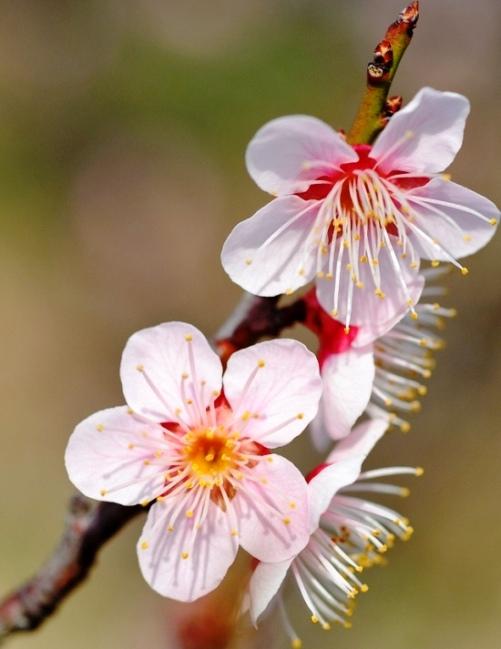 Baharı müjdeleyen çiçekler 5