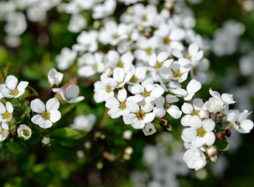 Baharı müjdeleyen çiçekler 8