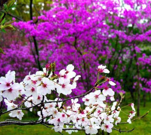 Baharı müjdeleyen çiçekler 9