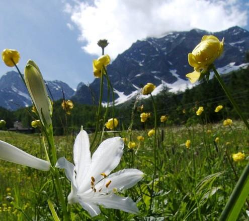 Tefekkürlük çiçekler 1