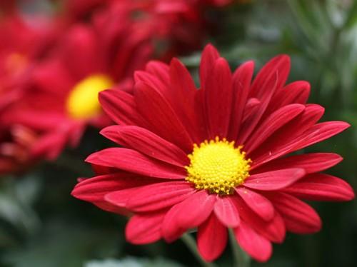 Tefekkürlük çiçekler 13