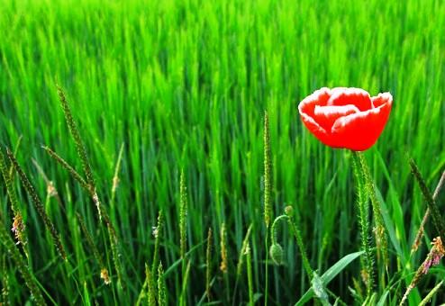 Tefekkürlük çiçekler 15
