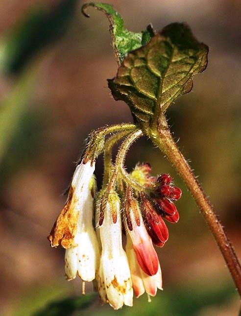 Tefekkürlük çiçekler 4