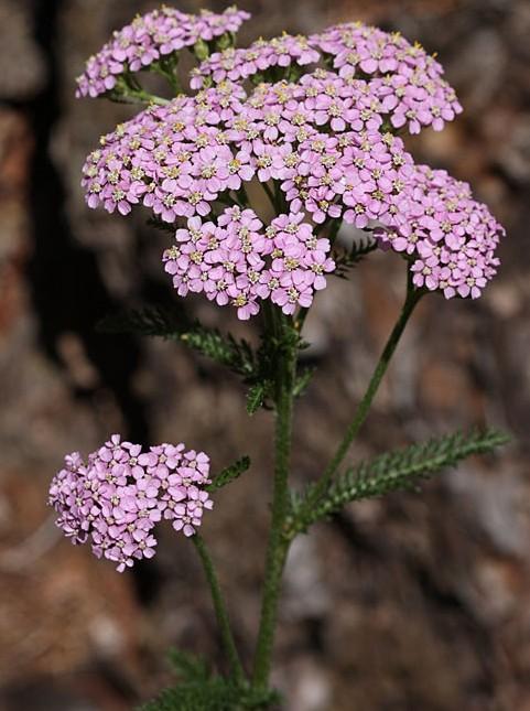 Tefekkürlük çiçekler 8
