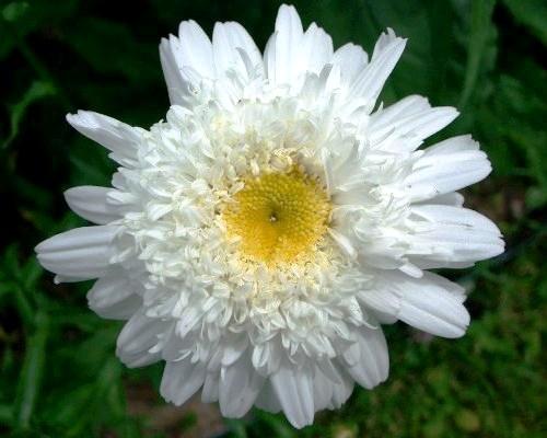 Nadir bulunan çiçekler 1