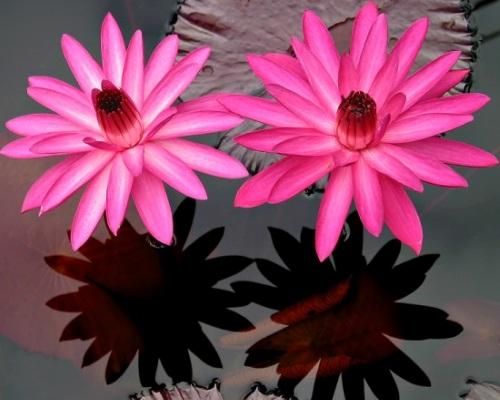 Nadir bulunan çiçekler 10