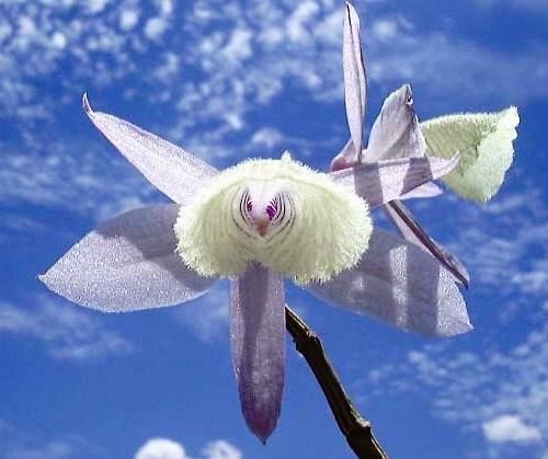 Nadir bulunan çiçekler 11