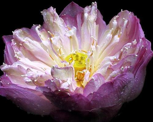 Nadir bulunan çiçekler 13