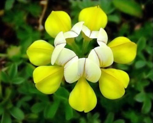 Nadir bulunan çiçekler 4