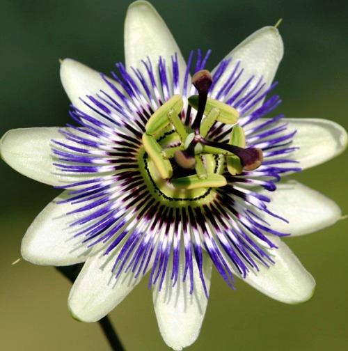 Nadir bulunan çiçekler 7